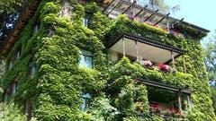 Grün verpackt - ein mit Efeu überwachsenes Haus an der Dufourstrasse in St. Gallen. (Bild: Doris Sieber)