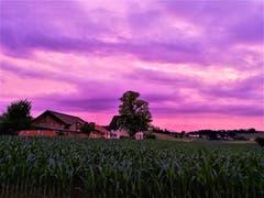 Traumhaftes Abendviolett am Himmel über Buttisholz. (Bild: Urs Gutfleisch, 2. Juli 2019)