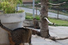 Die älteren Bewohner des Gruber Katzensheims lassen es ruhiger angehen.(Bild: Yann Lengacher)