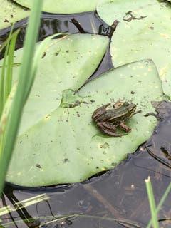 Der Froschkönig wartet auf bessere Zeiten. (Bild: Toni Sieber)