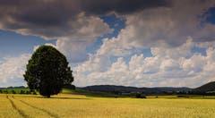 Bedrohliche Wetterstimmung im Moos. (Bild: André Egli, Ettiswil, 7. Juli 2019)