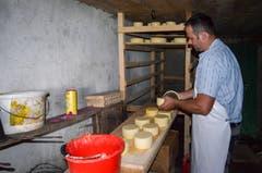 Die Käselaibe müssen jeden Tag mit Salzlake eingerieben und gewendet werden.