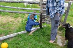 Den Buben ist es etwas langweilig, sie beginnen, einen Zaun zu flicken.