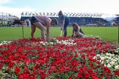 Sie pflanzen Blumen auf dem heiligen Rasen. (Bild: Andy Mettler / Swiss-Image)