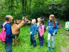 Kuss gefällig? Hoffentlich spuckt dieses Lama nicht. (Lagerbild: Ferienpass Nidwalden, Stans, 12. August 2019)