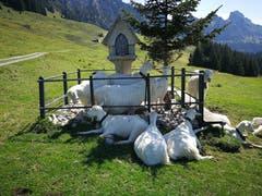 Andacht beim Bildstöckli, aufgenommen im Alpstein, zwischen Plattenbödeli und Ruesitz, Nähe von Alp Soll. (Bild: Claudia Brändli)