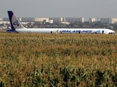 Ein russisches Passagierflugzeug mit mehr als 230 Menschen an Bord ist nach einer Kollision mit Vögeln in der Nähe von Moskau in einem Maisfeld gelandet. (Bild: KEYSTONE/EPA/SERGEI ILNITSKY)