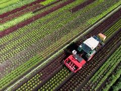 Im Rahmen eines Pilotprojekts wird derzeit ein Pflanzenschutzroboter entwickelt. Im Vergleich zum herkömmlichen Verfahren mit dem Spritzbalken soll der neue Roboter 40-70 Prozent weniger Pflanzenschutzmittel einsetzen und damit auch das Grundwasser entlasten. (Bild: KEYSTONE/ANTHONY ANEX)