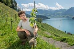 Jungwinzer Marius Tschuor (32) ist Pächter eines Rebberges in Vitznau.(Bilder: Dominik Wunderli, 14. August 2019)