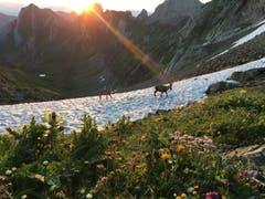Sonnenaufgang mit den Steinböcken in Anmarsch. (Bruno Burger)