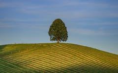 Geometrie der Appenzeller Bauern. (Bild: Luciano Pau)