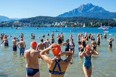 Ein wunderschönes Bergpanorama im Hintergrund. Ob die Schwimmer dieses während der Seeüberquerung überhaupt geniessen konnten? (Bild: Philipp Schmidli, Luzern, 18. August 2019)
