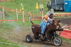 Wenn Obelix gerade mal keine Wildschweine jagt, benützt er sie als Transporttiere. (Bild: Boris Bürgisser, Ennetmoos, 17. August 2019)