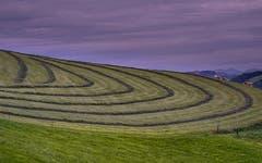 Geometrie der Appenzeller Bauern, aufgenommen bei Waldstatt AR. (Bild: Luciano Pau)