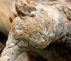 Verwittertes Holz. (Bild: Thomas Ammann)