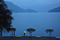 Der gelbe Regenschirm als Kontrast in Weggis am See. (Bild: Peter Muhr)