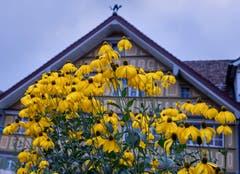 Diese Blumen trotzen dem Regen. (Bild: Luciano Pau)