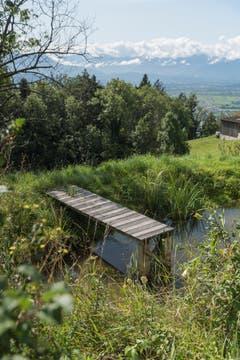 Wo Wasser aus dem Hang dringt, legen die Schmids Teichanlagen an. Diese sind Nützlingsreservoir und versorgen die Felder mit Feuchtigkeit.