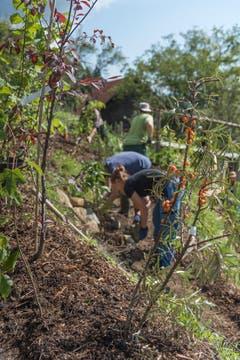 Angehende Permakultur-Landwirte arbeiten an der Sonnenfalle.