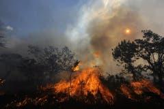 Mit jeder Minute verbrennt Wald in der grösse eines Fussballfeldes. (Bild: Keystone/Twitter/Ibama)