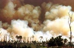 Über 72'000 Waldbrände gab es dieses Jahr bereits. (Bild: Keystone/Twitter/Ibama)