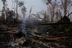 Da es momentan in der Region ungewöhnlich trocken ist, greifen die Brände immer wieder auch auf intakte Waldflächen über. (Bild: Eraldo Peres)