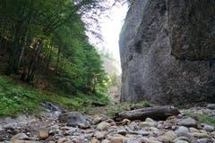 Immer wieder ragen Felswände mit dem für die Region typischen Nagelfluhgestein empor.