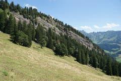 Auf der ganzen Wanderung veranschaulichen Felswände und Hügelzüge immer wieder, wie sich das Sedimentgestein über Jahrtausende zum Alpstein aufgefaltet hat.
