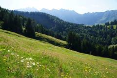 Eine lauschige Magerwiese breitet sich aus. Grillen zirpen und Hunderte Grashüpfer springen links und rechts weg. Unten im Tal im Wald wartet das Ofenloch.