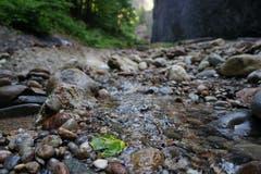 Mit einem Sprung ist der Bachlauf überquert.