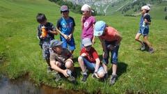 Die Kinder vom Naturerlebnis Zug haben einen Molch gesichtet. (Bild: Naturerlebnis Zug, Rämsenberg, 4. August 2019)