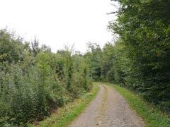 Unterwegs im Romanshorner Wald. (Bild: Sheila Eggmann)
