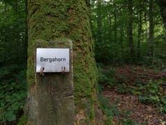 Beim Waldlehrpfad in Spitz. (Bild: Sheila Eggmann)