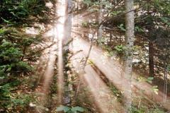 Der Herbst hält Einzug: Die Sonne scheint durch den Nebel im Wald. (Bild: Anita Imfeld-Leu, Zugerberg, 14. September 2019)