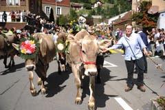 Festliche geschmückte Kühe beim Alpabzug in Wassen. (Bild: Urs Hanhart, 14. September 2019)