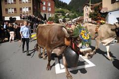 Festlich geschmückte Kühe beim Alpabzug in Wassen. (Bild: Urs Hanhart, 14. September 2019)