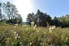 Seit einer gescheiterten Zonenplanänderung im Jahr 2004 liegt das Burgweier-Areal im Dornröschenschlaf. Was der Natur sichtlich nicht schlecht bekommen ist.