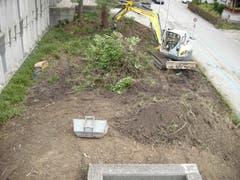 Hier sind schon fast alle alten Pflanzen entfernt. (Bild: PD, 10.09.2019)