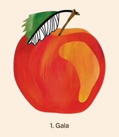 Die absolute Nummer eins bei den Äpfeln war 2018 die Sorte Gala mit 41 758 Tonnen geernteten Früchten. Quelle: Naturmuseum St. Gallen