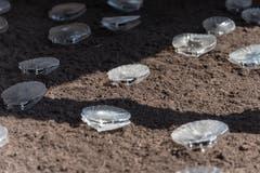 Mit den klingenden Muscheln geht Künstler Marco Barotti einerseits auf die Rolle dieser Lebewesen als Anzeiger von Umweltveränderungen ein. Anderseits deutet der Plastik, aus dem sie gefertigt sind, auf die Fähigkeit von Muscheln hin, Schadstoffe wie auch Mikroplastik aus dem Wasser zu filtern. (Bild: Lisa Jenny - 28. August 2019)