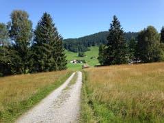 Blick übers Hochmoor zur Stossstrasse und dem Bahnhalt Schachen. Der Schopf in der Wiese gehört bereits zu «Klang-Moor-Schopfe». Hinter den Bäumen rechts verbirgt sich das Schützenhaus, das Zentrum des Audio-Festivals. (Bild: Reto Voneschen - 31. August 2019)