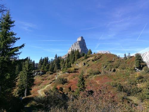 Der Weg ist das Ziel. Der kurze steile Aufstieg zum Seblengrat 1891 m bei herrlicher Aussicht auf die Berge und der farbenfrohen Natur des Herbstes. (Bild: Urs Gutfleisch)
