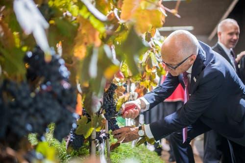 Wein ist dieses Jahr an der Olma der Schwerpunkt. (Bild: Benjamin Manser)
