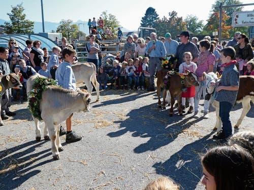 Dea (Mitte) ist Miss Viehschau Oberriet, gefolgt von Elopa (rechts) und der Kuh Columbia.