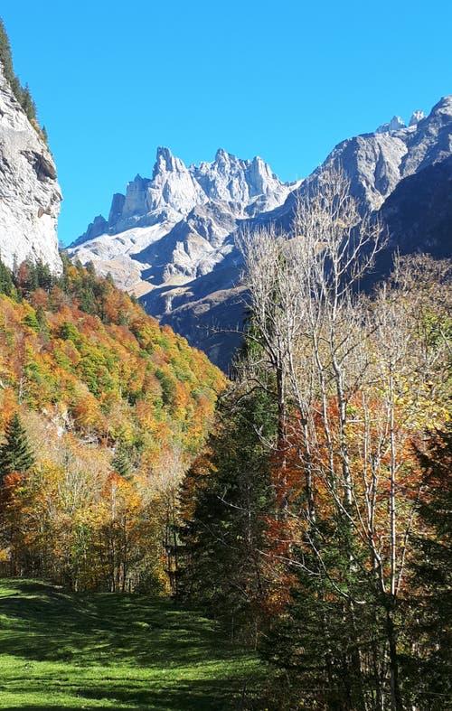 Engelberg,Wanderung Richtung Alpenrösli: Herbstwald mit Spannörter. (Bild: Maria Infanger-Steiner (Engelberg, 13. Oktober 2018))