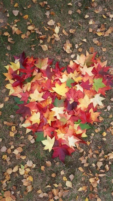 So schön kann der Herbst sein! (Bild: Anita Kempf-Marschik)