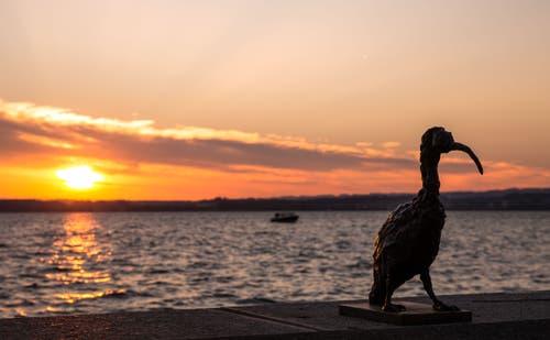 Sonnenuntergang Zugersee (Bild: Daniel Hegglin)