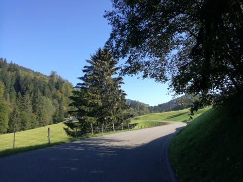 Nach St.Peterzell führt eine Landstrasse direkt nach Dicken. (Bild: Marlen Hämmerli)