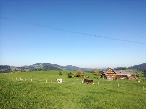 Auf dem Weg nach St.Peterzell gilt es, mehrere Kuhweiden zu durchqueren. (Bild: Marlen Hämmerli)