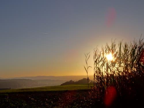 Der Tag erwacht über dem Bodenberg. (Bild: Heidi Bucher (Fischbach, 4. Oktober 2018))